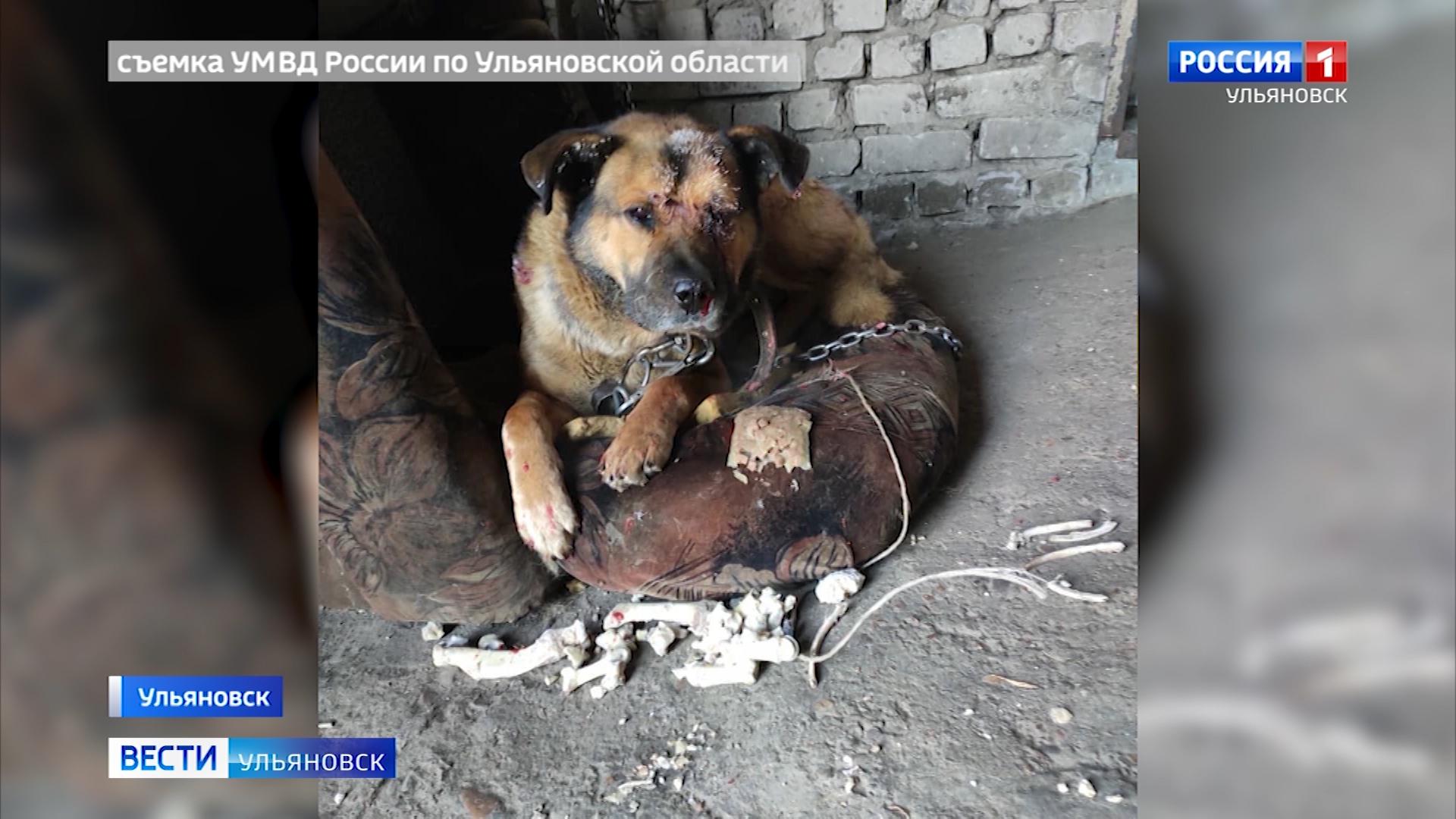 Живодеру из Самары может грозить до трех лет лишения свободы