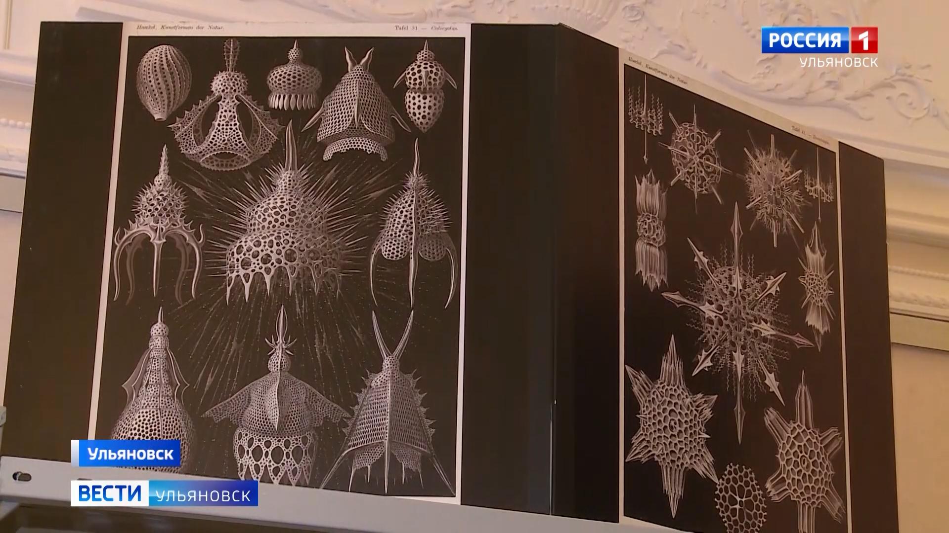 Ульяновцам предлагают познать тайный мир древних организмов